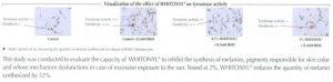 whitonyl-study